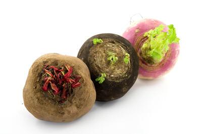 Turnip and beet